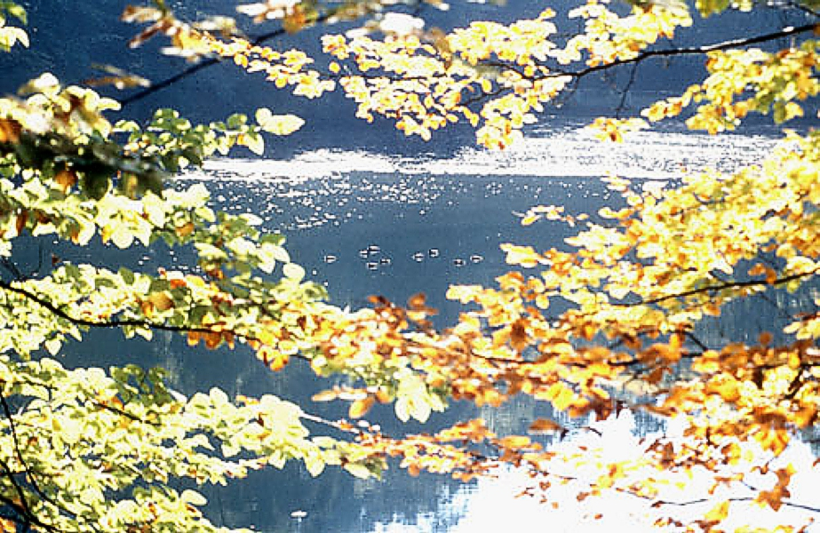 Herbstliches_Laub_See_Foto_L_Hechel_Dental_Elan